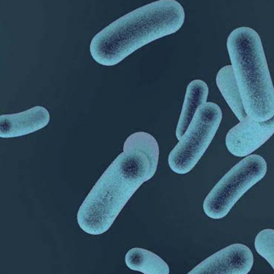 Legionella bakterier